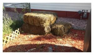 Rotten hay