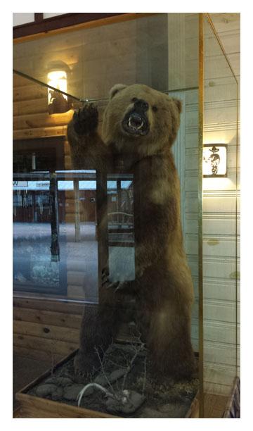 Stuffed bear at Wall Drug Store