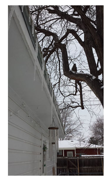 Icicles on garage roof, snow on trees