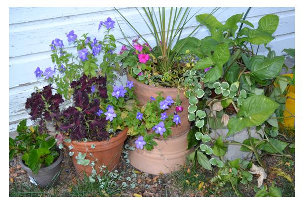 2016fallflowerpots